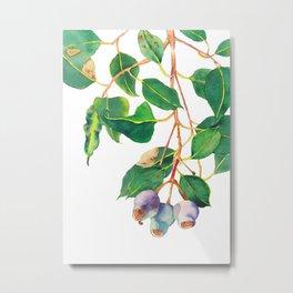 Australian Gumnuts Watecolour Metal Print