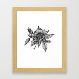 Sweet briar rose Framed Art Print