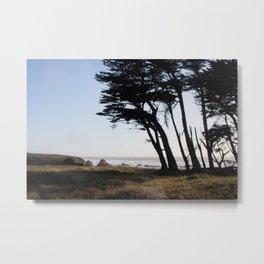 Trees in Fort Bragg, Northern California Metal Print