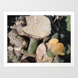 Cut Logs Art Print