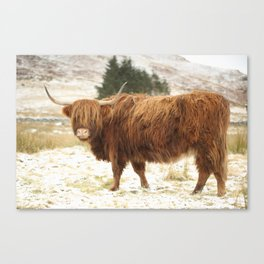 Red Highland Cattle in Winter Canvas Print