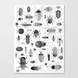 Ink Beetles Canvas Print
