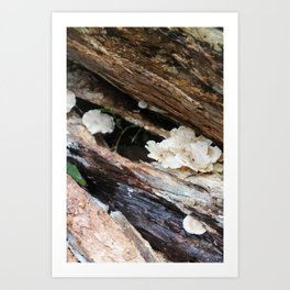 Where The Fairies Live Art Print