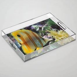 Yellow Longnose Butterfly Fish Acrylic Tray