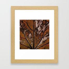 OLD BROWN LEAF WITH VEINS SHABBY CHIC DESIGN ART Framed Art Print
