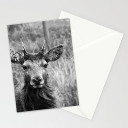 The young Highland Stag B/W - Loch Arkaig, Highlands of Scotland - 2019 Stationery Cards