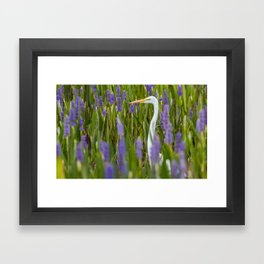 Great Egret Among the Pickerelweeds Framed Art Print