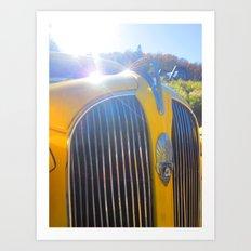 yellowbelly Art Print