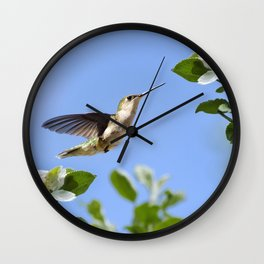 Spring Hummingbird Wall Clock