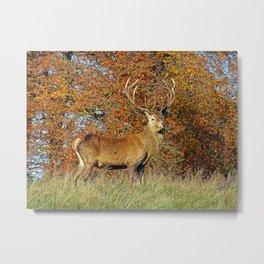 Red Deer Stag Metal Print