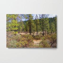 Sugar Pine Reservoir Metal Print