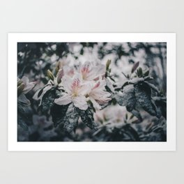 Flowers in the Snow Art Print