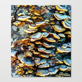 Tree Fungi Pattern Canvas Print