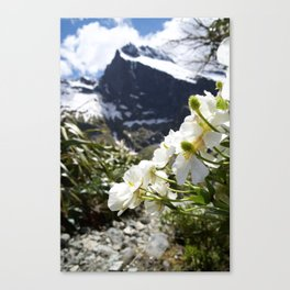 White Flowers and Mountain Pass (Milford Sound) Canvas Print