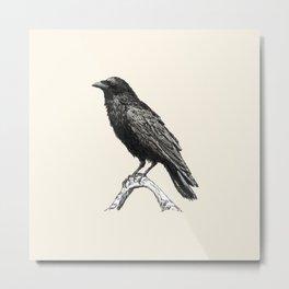 Raven M Metal Print