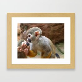 Monkey Love and Attitude  Framed Art Print