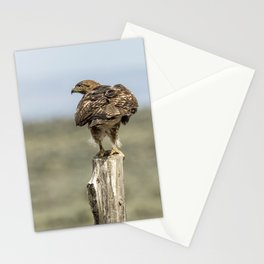 Red-Tailed Hawk Preparing to Fly Stationery Cards