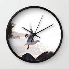 Seagull takes flight over Dunedin's MacAndrew Bay Wall Clock