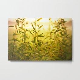 meadow herbs Metal Print