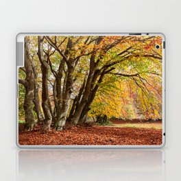 Colorful autumn in the woods of Canfaito park, Italy Laptop & iPad Skin