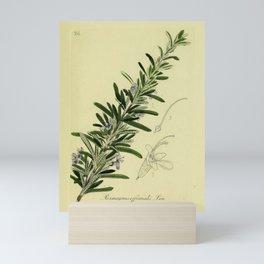 Botanical Rosemary Mini Art Print