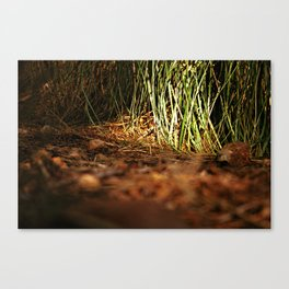Macro close up forest life spying Canvas Print