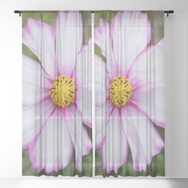 Winter Cosmos Flower in Pink 7 Sheer Curtain