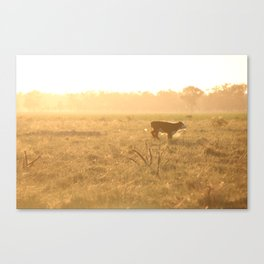 Calf on the Run Canvas Print