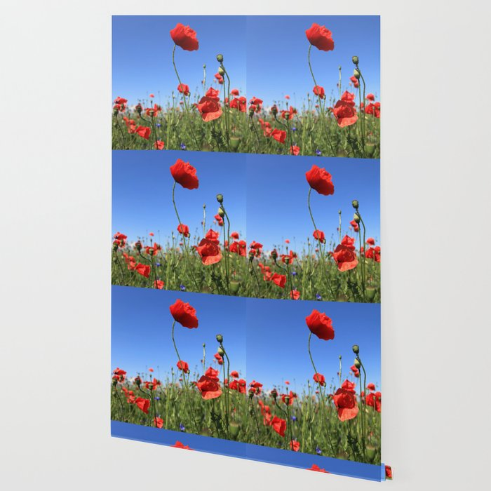 poppy flower no15 Wallpaper
