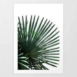Palm Leaves 13 Art Print