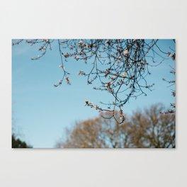 Holland Park #1 Canvas Print