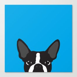 Boston Terrier Blue Canvas Print