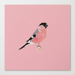 Siberian Bullfinch (rose palette) Canvas Print