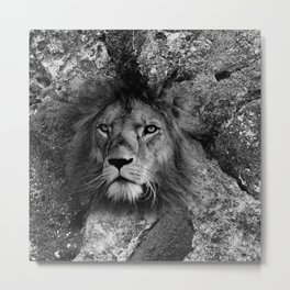 The Fearless Lion Metal Print