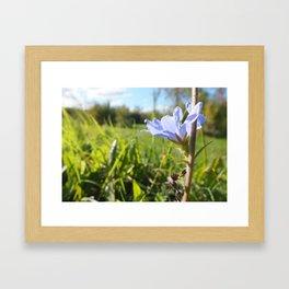Lavender Field Framed Art Print