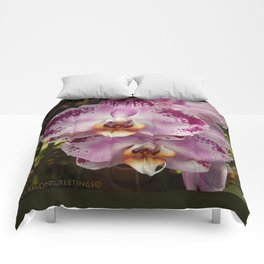 Pink Orchid Blossom from Mexico Comforters