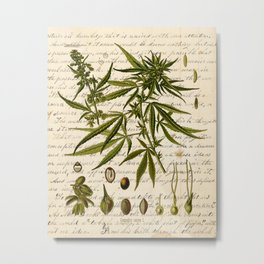 Marijuana Cannabis Botanical on Antique Journal Page Metal Print