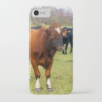 cows iPhone & iPod Cases featuring Cows by AstridJN