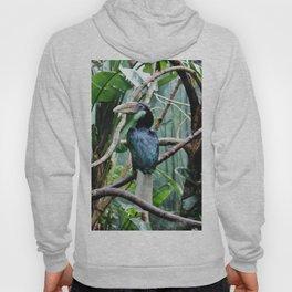 Female Hornbill Hoody