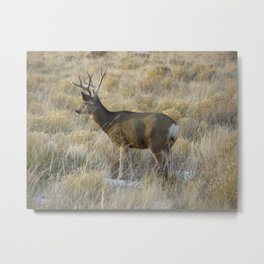 Buck in Colorado Metal Print