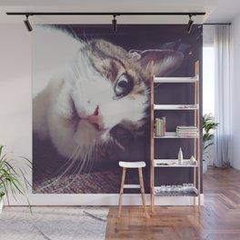 Cat eye Wall Mural