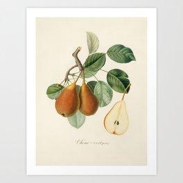 Kitchen, Vintage, Botanical, Art, Scandinavian, Wall art Print Art Print