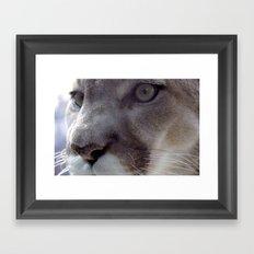 Cougar Framed Art Print