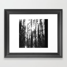 can't see the forest through the trees Framed Art Print