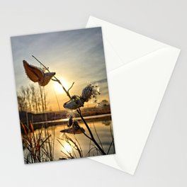 Milkweed Pond Stationery Cards