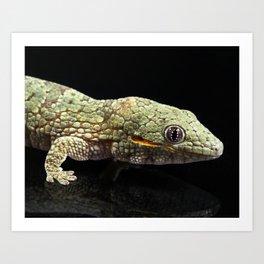 Eurydactylodes agricolae Gecko Art Print