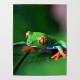 Little Tree Frog (Color) Poster