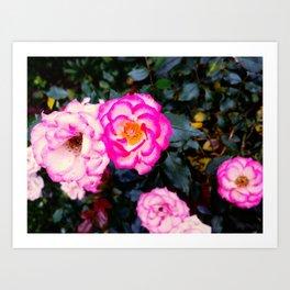 little roses Art Print