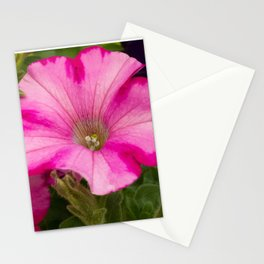 Pink Pansies Stationery Cards