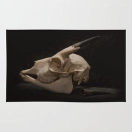 White Tail Deer Skull Rug